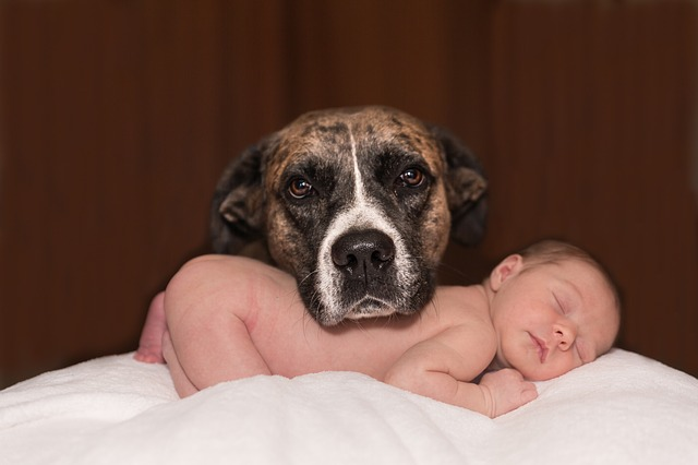 Introducing Your Pup to the New Baby