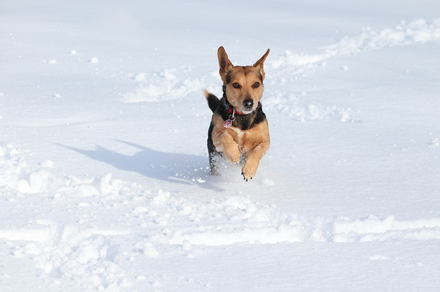 Protecting Your Pup in Winter
